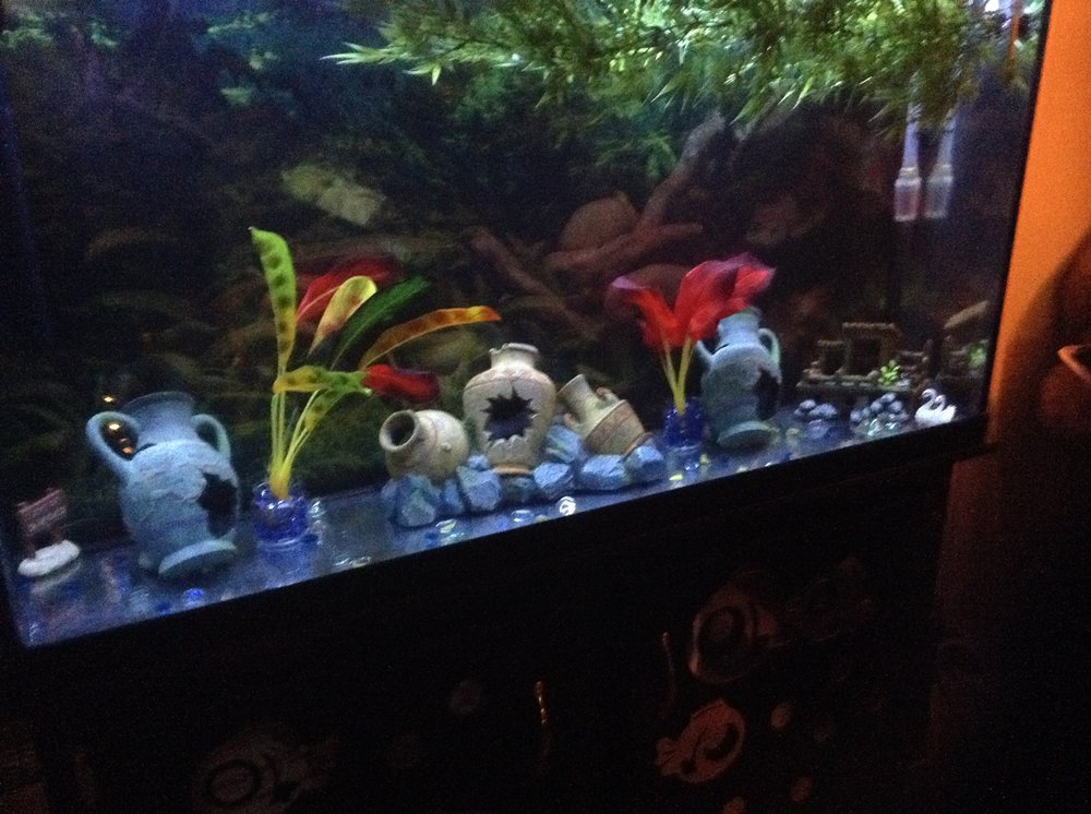World Of Fish Aquarium Service: Carrollton, TX