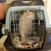 Low Cost Spay Neuter Clinic 12 Reviews Veterinarians 409 N