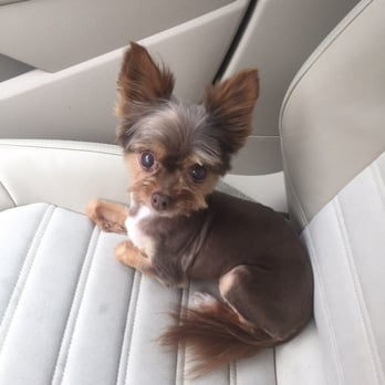Little debbys dog grooming 54 photos 44 reviews pet photo of little debbys dog grooming san antonio tx united states magen solutioingenieria Choice Image
