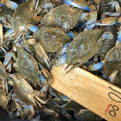Top 10 Best Buy Live Crab in Bronx, NY - Last Updated
