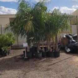 A P Nurseries Lawn Mower 30