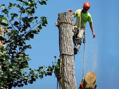 Top Notch Tree Service: 4051 Maple St, Loon Lake, WA