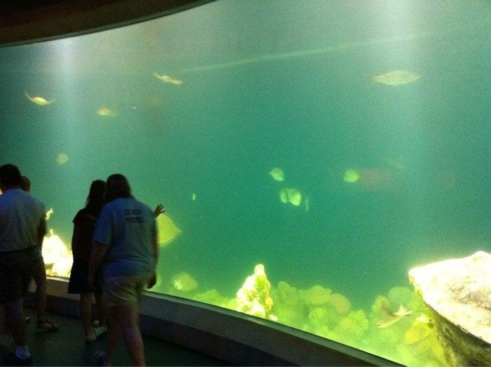 Photos For National Mississippi River Museum Aquarium Yelp