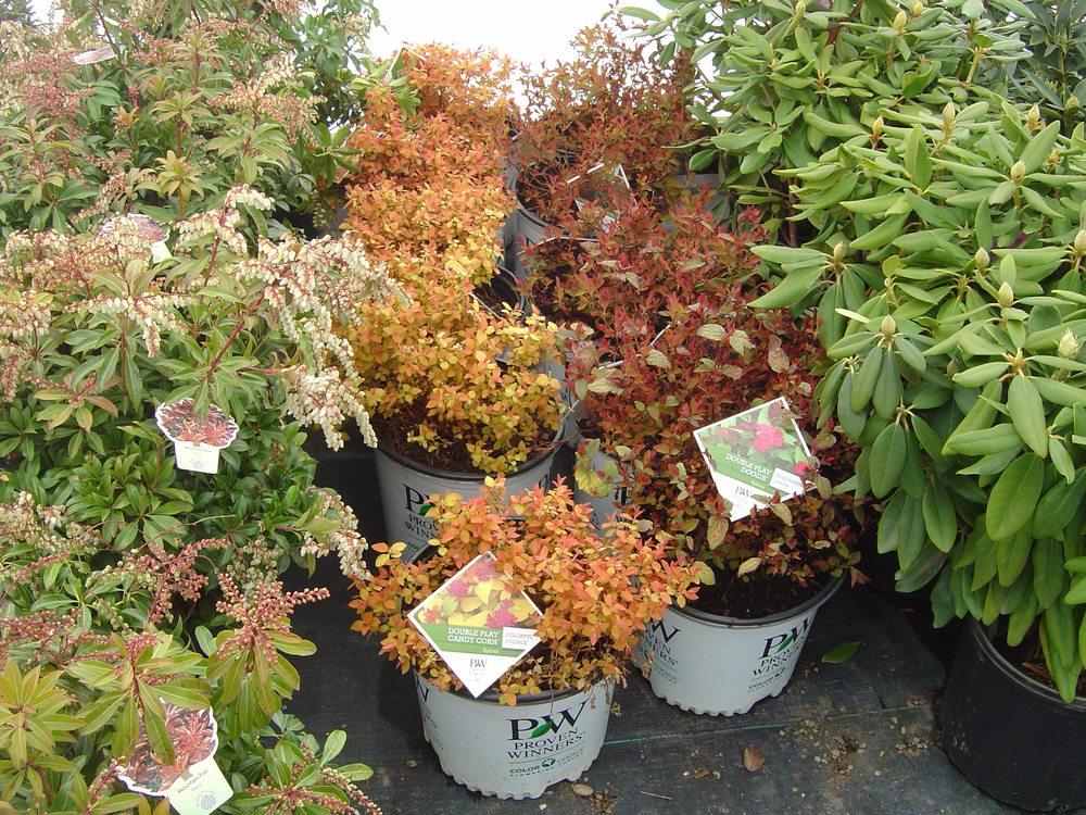 Dayton Flower & Garden Center: 4474 Cleveland Massillon Rd, Norton, OH
