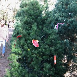 Santa's Forest Christmas Tree Farm - Christmas Trees ...