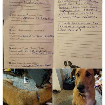 Petsmart Canada Dog Training Review