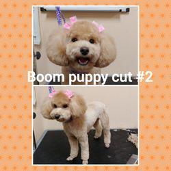 City Dog Pet Grooming 254 Photos 98 Reviews Pet Groomers