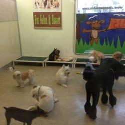 Clean paws pet salon resort 31 photos 12 reviews for 4 paws pet salon
