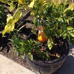Armstrong Garden Centers 118 Fotos Y 45 Rese As Viveros Y Jardiner A 10320 Friars Road