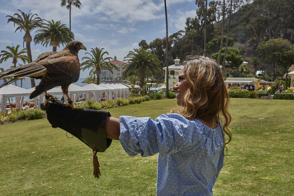 Catalina Falconry Experience: 1 St Catherine Way, Avalon, CA