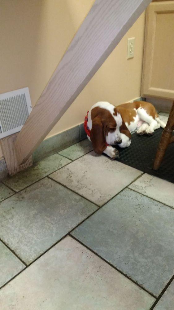 Ellwood Animal Hospital: 728 Lawrence Ave, Ellwood City, PA