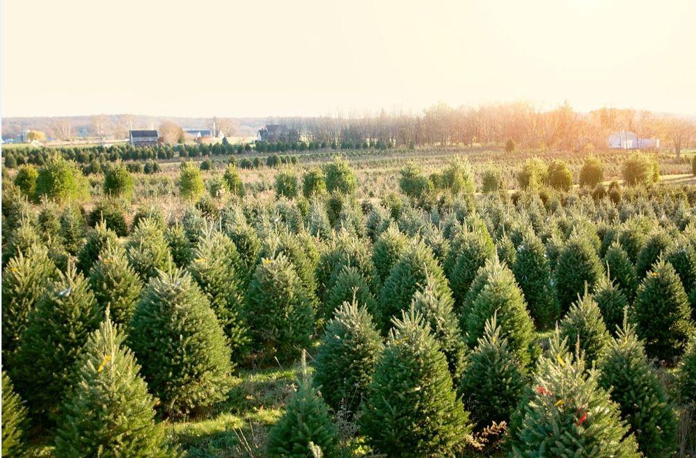 Misty Run Tree Farm: 2017 Brandt Rd, Annville, PA