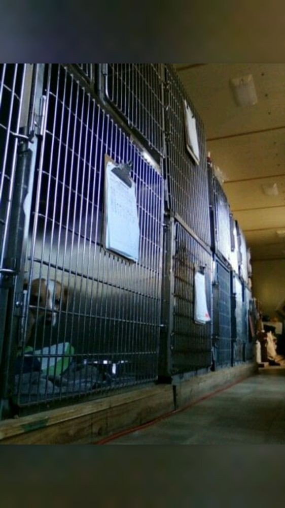 Discount animal clinic
