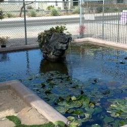 Photo Of Tucson Koi U0026 Water Gardens   Tucson, AZ, United States.