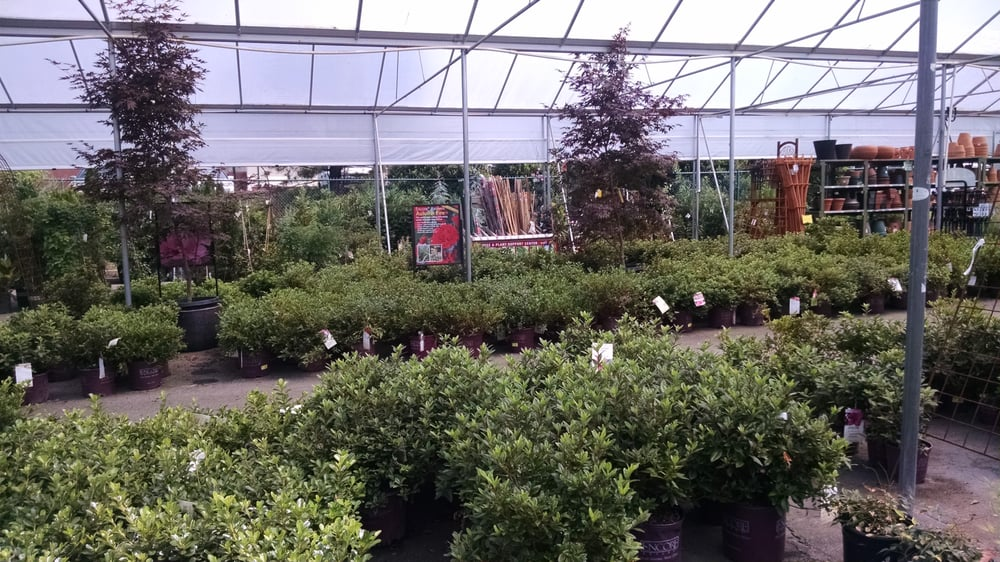 Pike Nursery Near Me: Trees And Bushes.