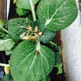 Photo Of Armstrong Garden Centers   Torrance, CA, United States.  #armstrongladybugs Release