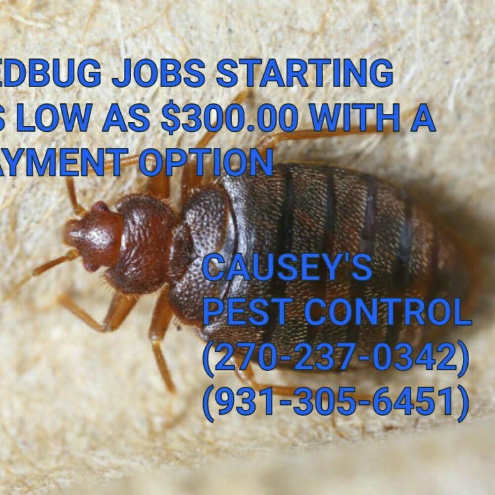 Causey's Pest Control: 194 Happy Hollow Rd, Dover, TN
