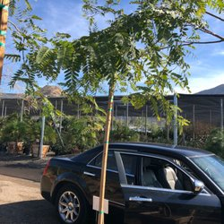Photo Of Evergreen Nursery El Cajon Ca United States