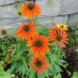 Photo Of Warner Nursery Garden Center Simsbury Ct United States
