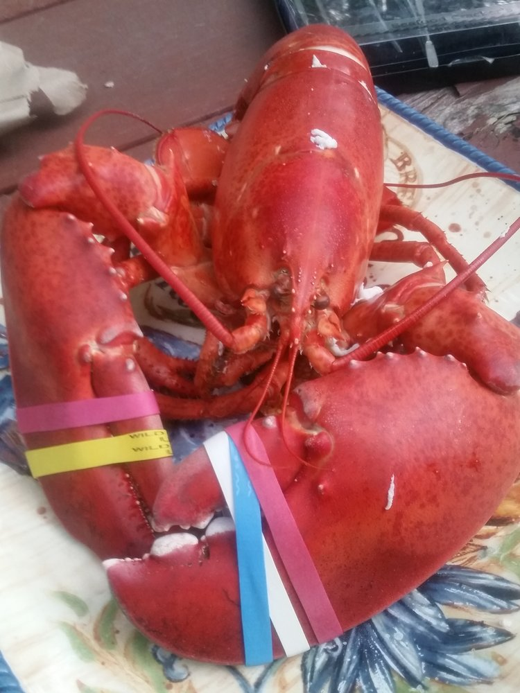 Defiant Lobster Co: 125 Landing Rd, Hampton, NH