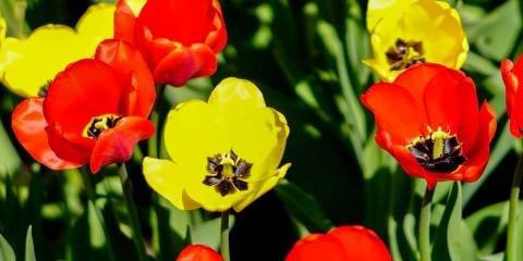 Montana Gardens: Whitefish, MT