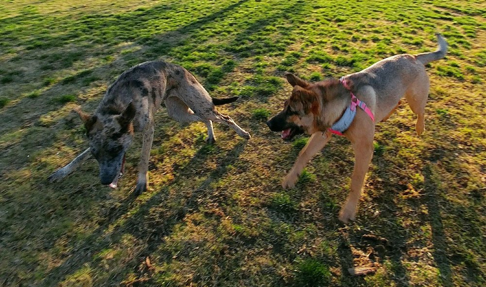پارک سگ La Paws