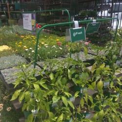 Armstrong Garden Centers 22 Photos 21 Reviews Nurseries