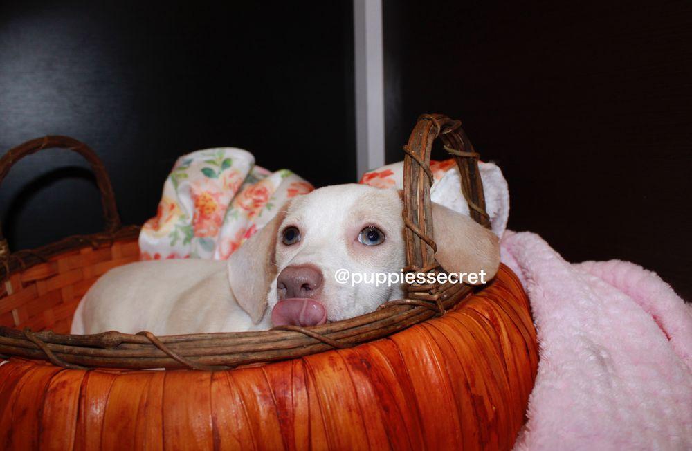 Puppies Secret