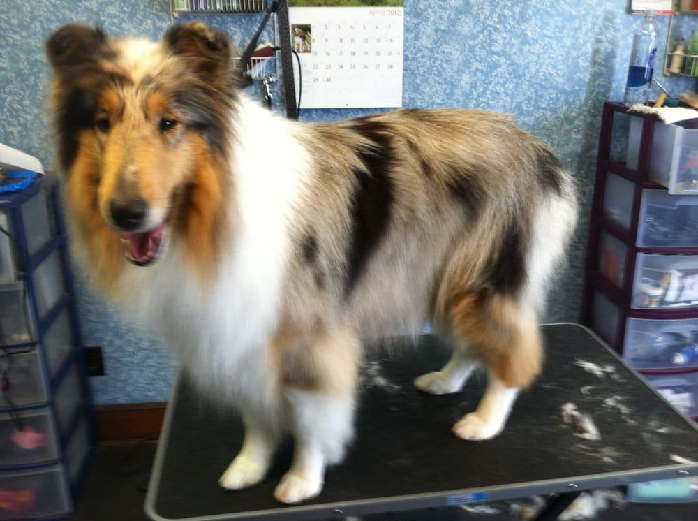 Hair of the Dog Grooming Salon: 3300 E Main St, Endicott, NY