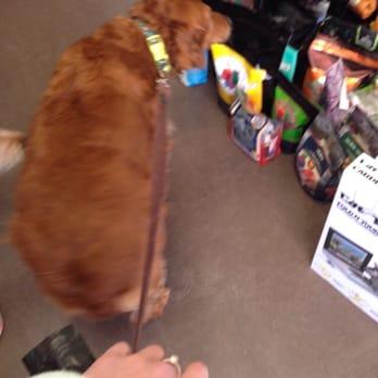 barkstown road 21 photos 22 reviews pet shops 2005 bonnycastle ave highlands. Black Bedroom Furniture Sets. Home Design Ideas