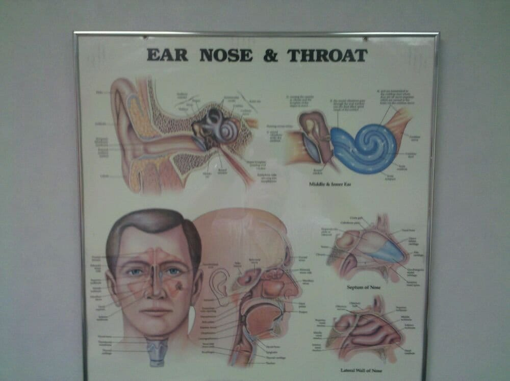 Eastern Virginia Ear Nose Throat Specialists Ear Nose Throat