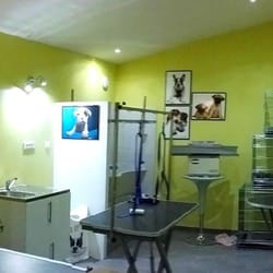 chiots pet shops 1 rue pierre pierrel plan de. Black Bedroom Furniture Sets. Home Design Ideas