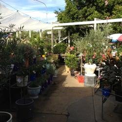 Photo Of Cottage Garden Nursery East Brisbane Queensland Australia