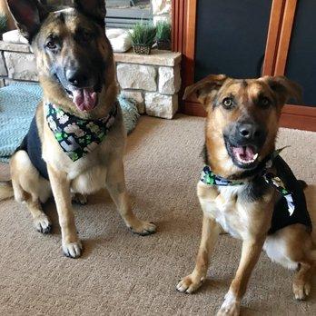 Dog Grooming Glenwood Boise