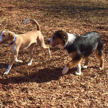 Heather Farm Dog Park Walnut Creek