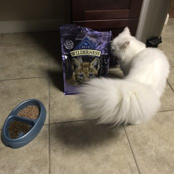 best food for cats with diarrhea