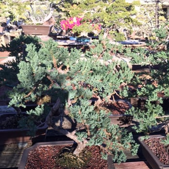 Photo Of Fuji Bonsai Nursery   Sylmar, CA, United States