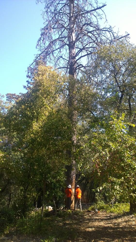 Anthony's Tree Service: Auburn, CA