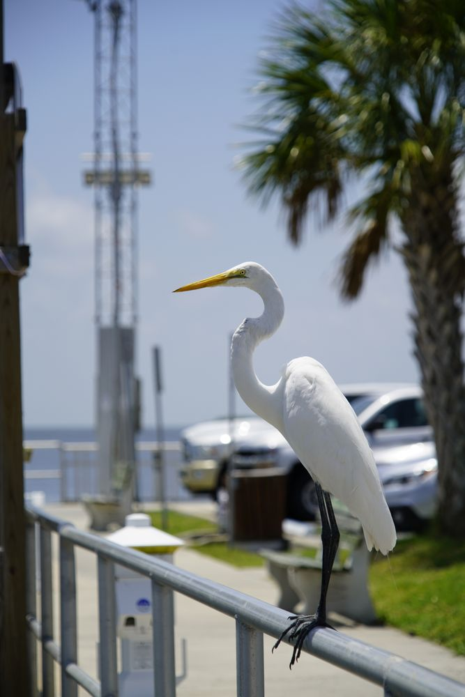 Tidewater Tours: 302 Dock St, Cedar Key, FL