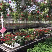 Photo Of Varner S Greenhouse Nursery Niles Mi United States