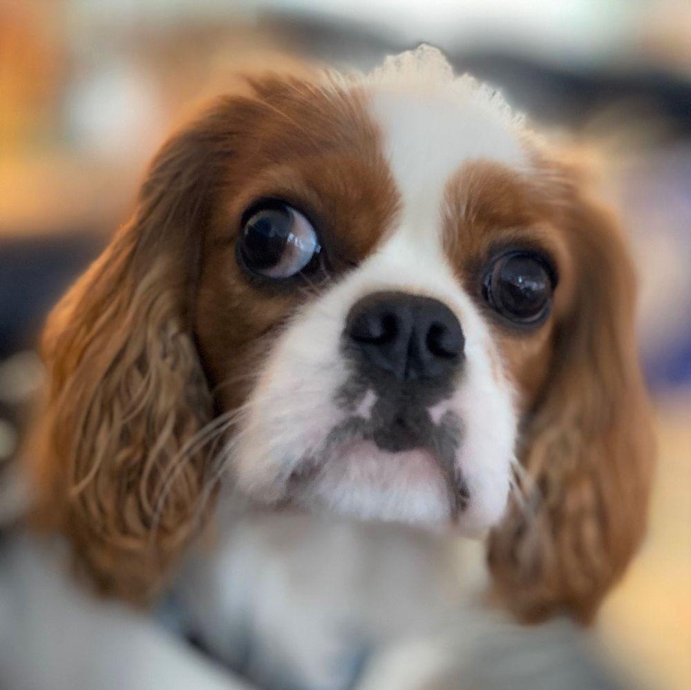 Fondren Pet Care Center