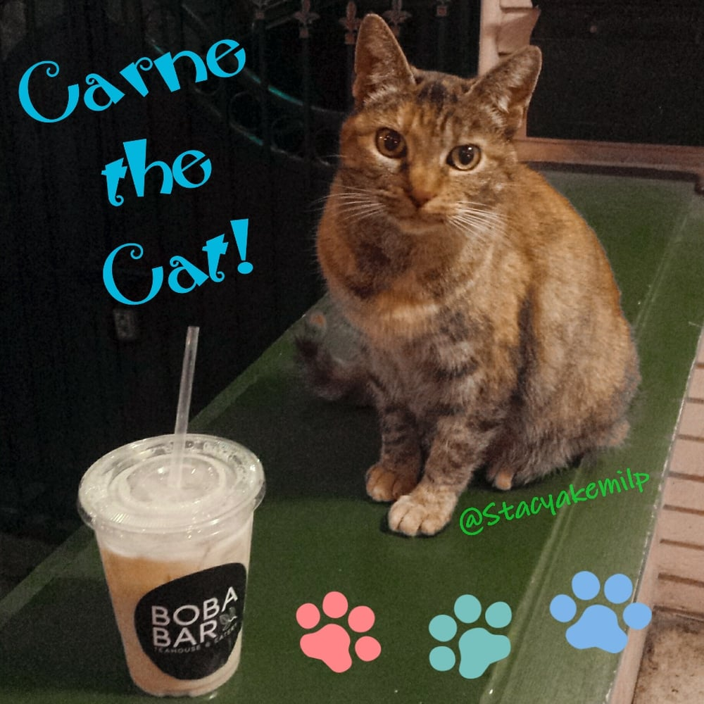 Carne the Cat with my Lychee Milk Tea Such an Awesome cat