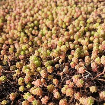 Armstrong Garden Centers 47 Photos 67 Reviews Garden Centres 1364 Morena Blvd Bay Park