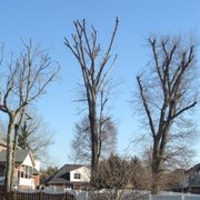 Higher Calling Tree Services - 28 Photos - Tree Services ...