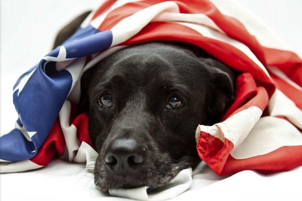 Dog Guard of The Valley: Waynesboro, VA