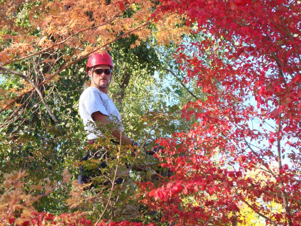Tree Wizard Tree Service