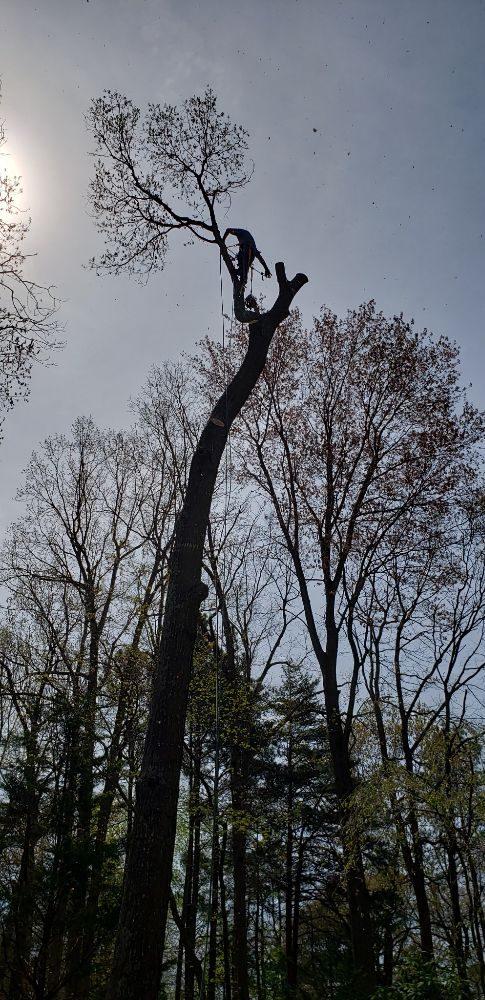 The Family Tree: Millsboro, DE