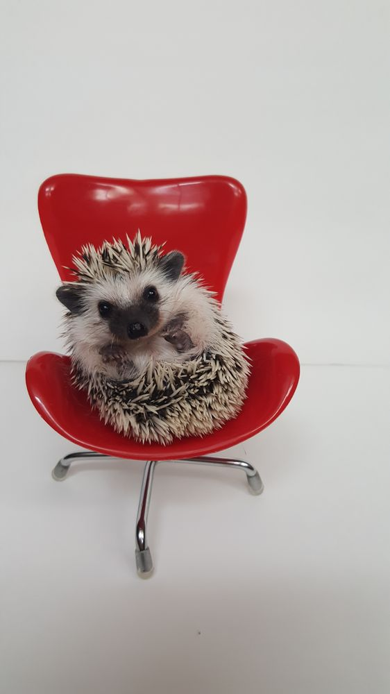 Otsego Hedgehogs: 1332 Jansen Ave SE, Hanover, MN