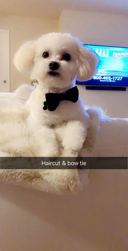 Southern Styles Pet Salon: 366 W Main St, Hendersonville, TN