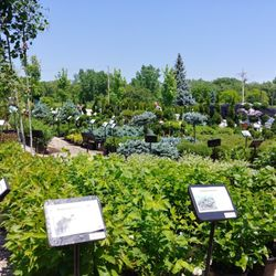 Photo Of Platt Hill Nursery Bloomingdale Il United States So Many To